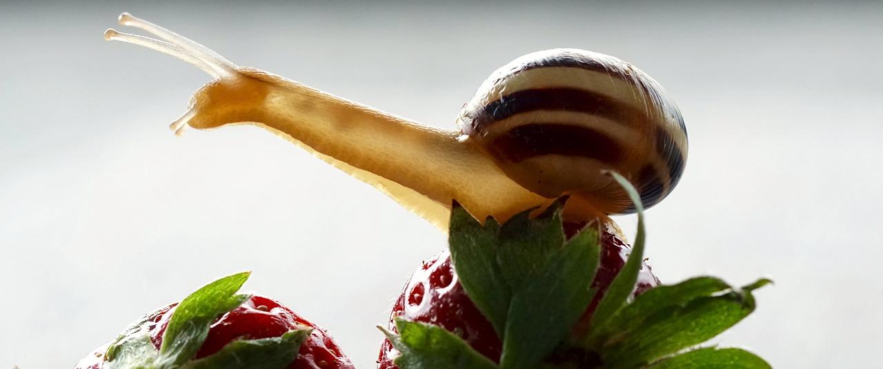 чем питаются улитки в природе