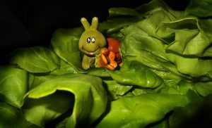 Чем кормить улиток ахатин