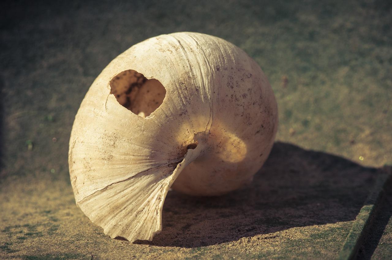 Треснул панцирь у улитки ахатины