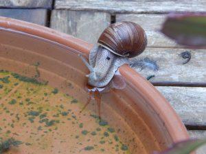 вода улитке