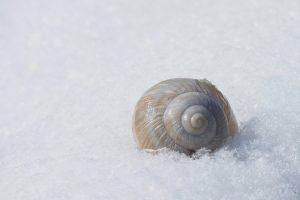 Улитка в снегу