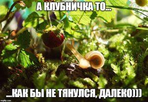 Мем про клубничку и улитку