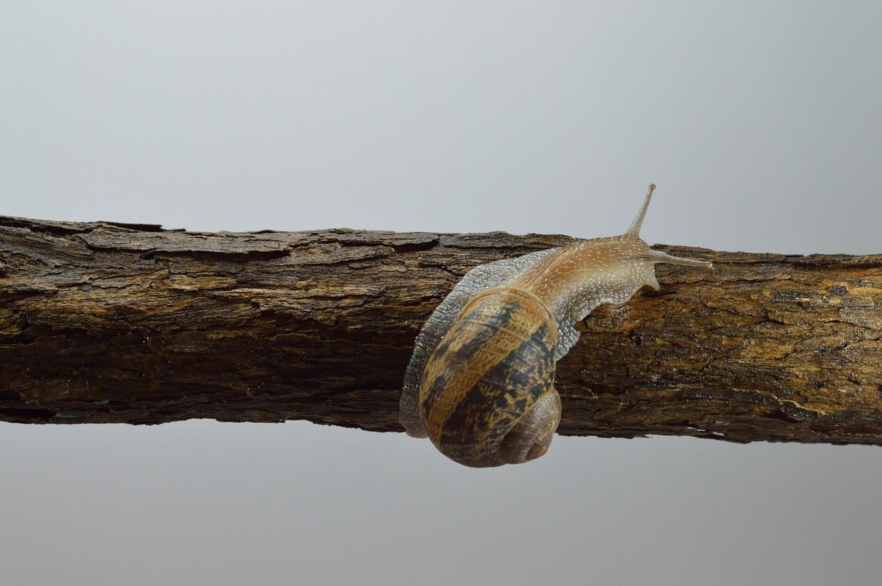 Улитка на дереве